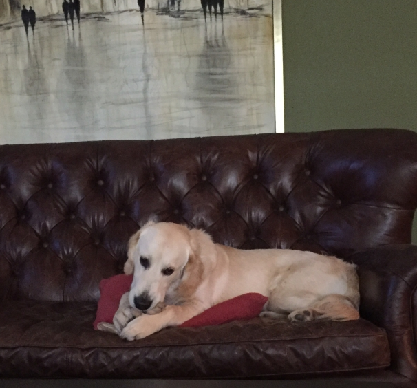 Jackson on Couch